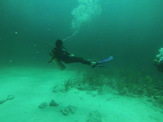 Stuart Cove's Dive Bahamas: First Dive, no feeding