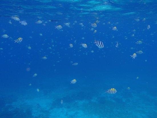 Shangri-La's Mactan Resort & Spa : 魚もたくさんいます