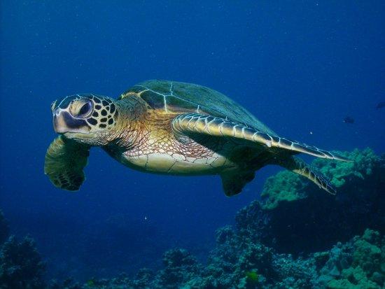 Blue Wilderness Dive Adventures : Puaco Reef