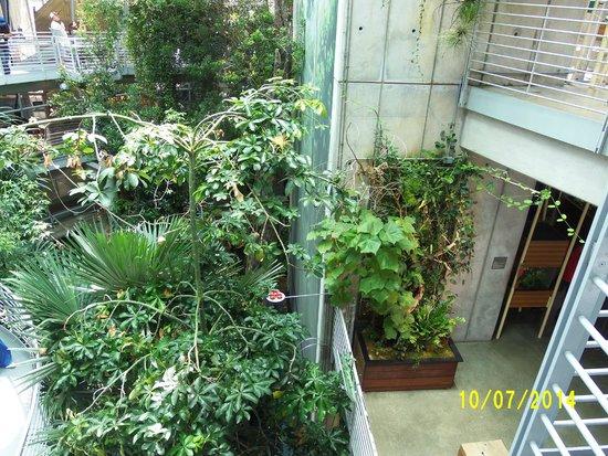 California Academy of Sciences : rainforest