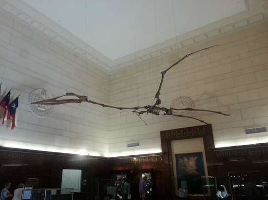 Texas Memorial Museum: Pterosaur in entrance hall