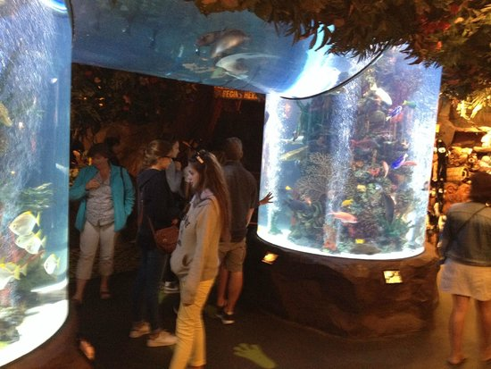 Rainforest Cafe: Aquariums partout