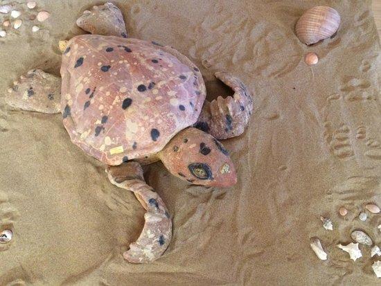 sortie du nid des bébé tortues - Picture of Zakynthos ...