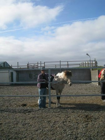 Islenski Hesturinn, The Icelandic Horse - Riding Tours: Getting ready to ride!
