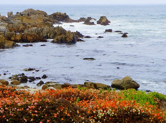 17-Mile Drive : Wlid lovery flowers