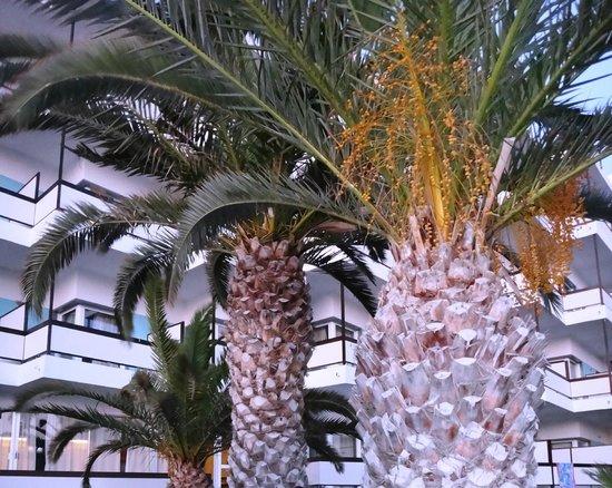 Belair Beach Hotel : во дворе отеля