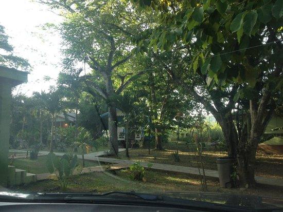 Midas Belize: Green