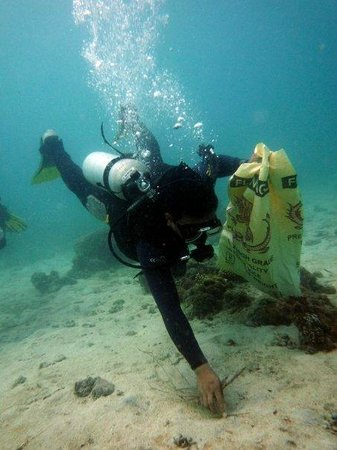 Thresher Shark Divers: reef clean up
