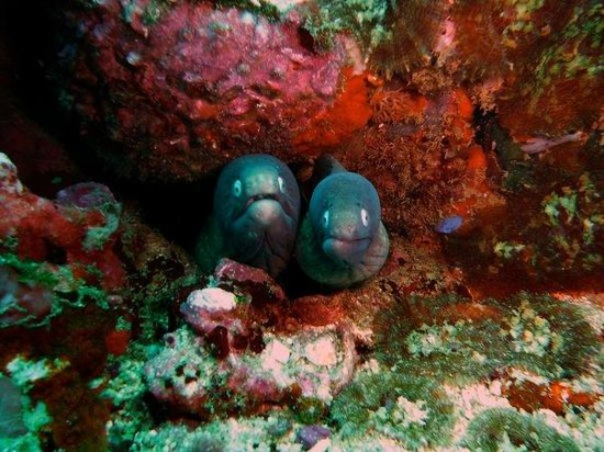 Thresher Shark Divers: hello!