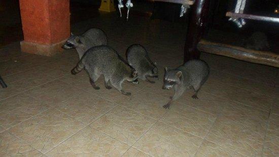 Sandos Caracol Eco Resort: Animales por todos lados.