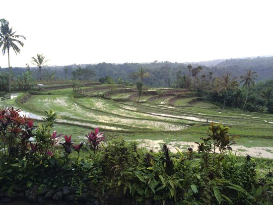 Ijen Resort & Villas : View from our bedroom