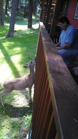 Wallowa Lake Resort: Friendly deer saying Hello!
