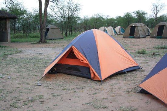 African Spoonbills Tours