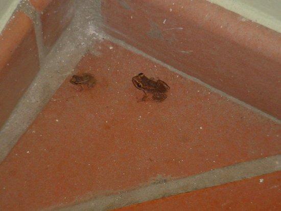Sandals Halcyon Beach Resort: Frog's