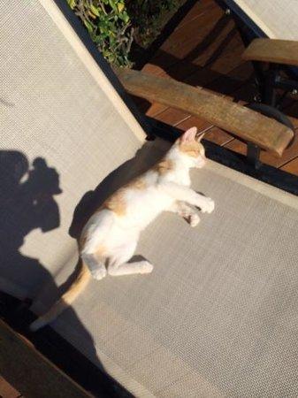 Estival Park Salou: рыжие котики на территории клуба