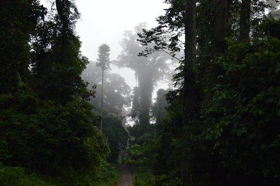 Borneo Rainforest Lodge: morning view