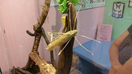Victoria Bug Zoo : Riesiger Krabbler