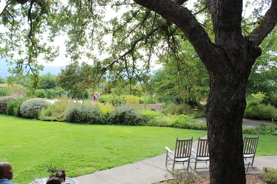 Frog's Leap Winery: View from tasting room