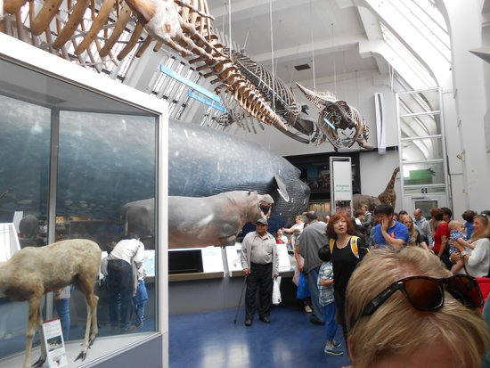 Natural History Museum: Blue Whale