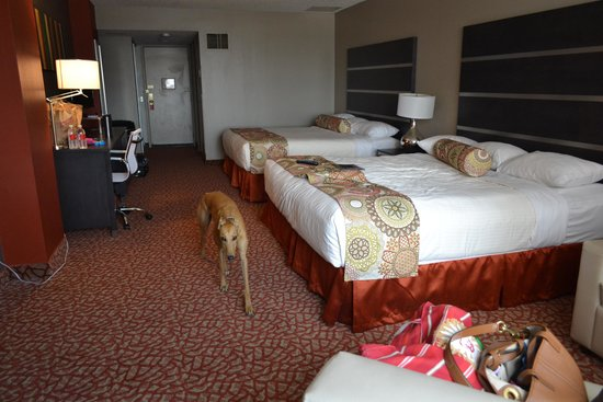 greyhound reno casino special