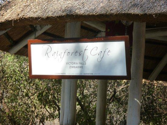 The Rainforest Cafe: RAINFOREST CAFE'