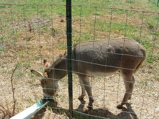 Grandad's Apples: Lil Donkey