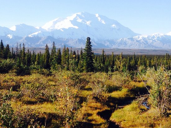 Denali Backcountry Lodge : Denali on a clear morning in August. It was awe inspiring.
