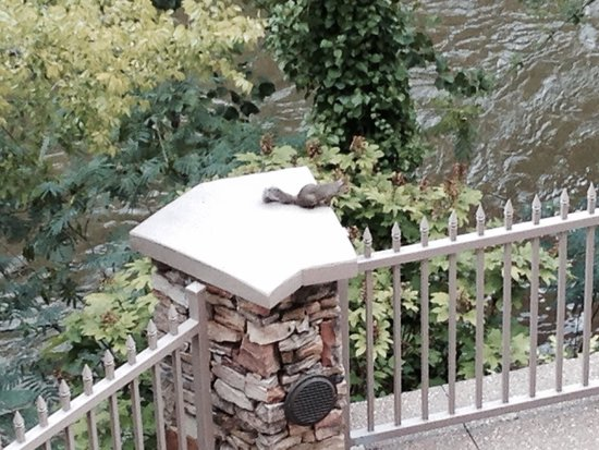Music Road Resort Hotel: Squirrel on top of post on back patio.