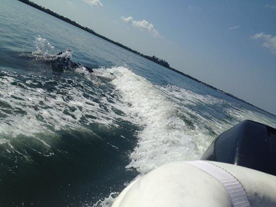 Coastline Dolphin & Snorkeling Excursions: dolphins in the wake