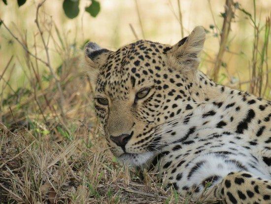 Dulini Lodge: Female Leopard