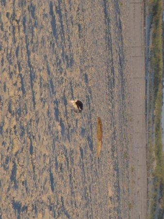 Jones Beach State Park: Seagull