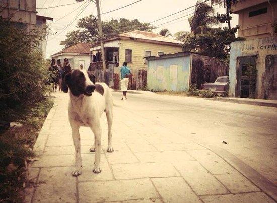 Belize Tourism Village: Beyond the black tourist gate...