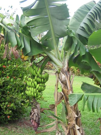 Bibi's Hideaway: Fruit everywhere!