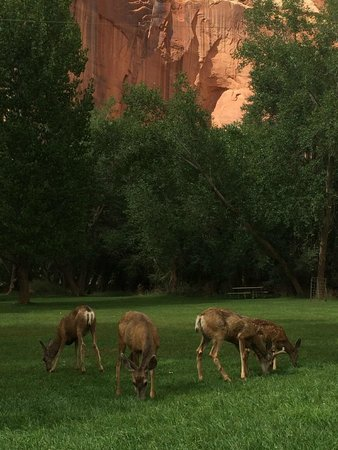 Bryce Canyon Livery Bed and Breakfast : Capitol Reef