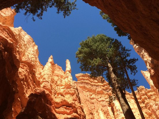 Bryce Canyon Livery Bed and Breakfast: Wall Street on Navajo Loop