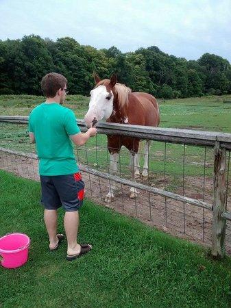 Egg Harbor, WI: Feeding the horses