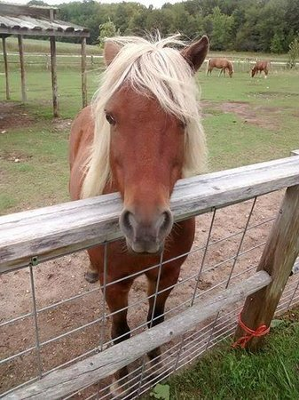Egg Harbor, WI: Very nice pony and photogenic at that!