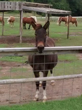 Egg Harbor, WI: Another friendly pony