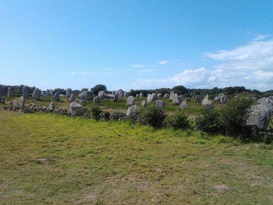 Megaliths of Carnac : La vista dei Menir dalla strada laterale