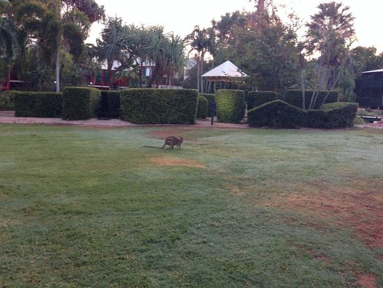 Cable Beach Club Resort & Spa: A little wallaby spotted early morning