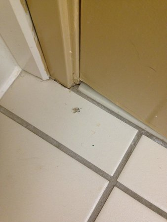 Extended Stay America - Memphis - Germantown: dead bugs behind door in bathroom