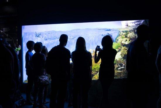 Aquarium La Rochelle : aquarium