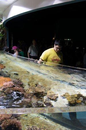 Aquarium La Rochelle : nettoyage des doigts gras
