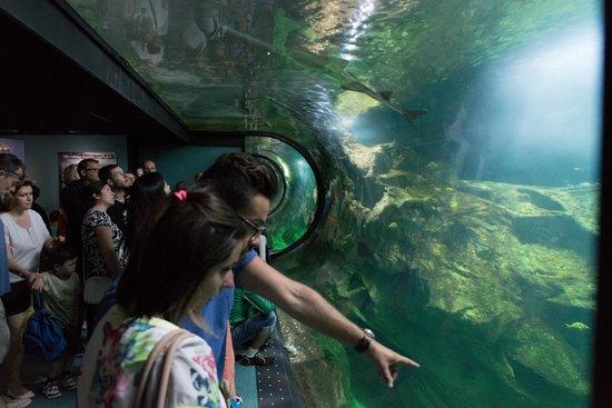 Aquarium La Rochelle : panoramique