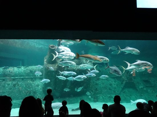 North Carolina Aquarium at Pine Knoll Shores: UPDATED 2020 ...
