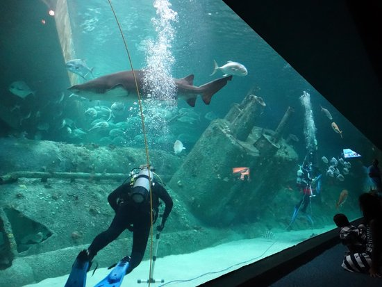 Shipwreck exhibit - Picture of North Carolina Aquarium at ...
