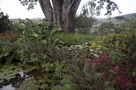 Gibb's Farm : Walking around
