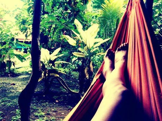 Bambu Hostel: Reading my book in a Hammock looking at the lovely gardens and pool...there is even a rescued Co