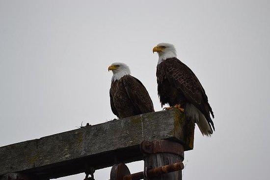 Zachar Bay Lodge: See an eagle or two