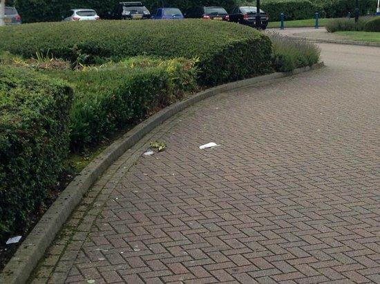 Hilton Northampton: Litter at entrance
